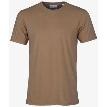 tekstylia T-shirty z krótkim rękawem Colorful Standard T-shirt  Sahara Camel marron